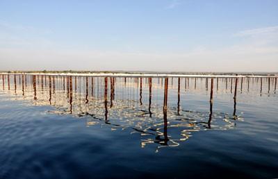 Depuis le remembrement, 2750 tables sont implantées dans l'étang.
