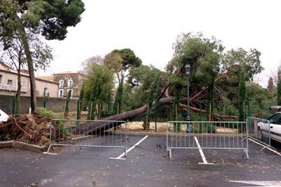 arbre_girard2