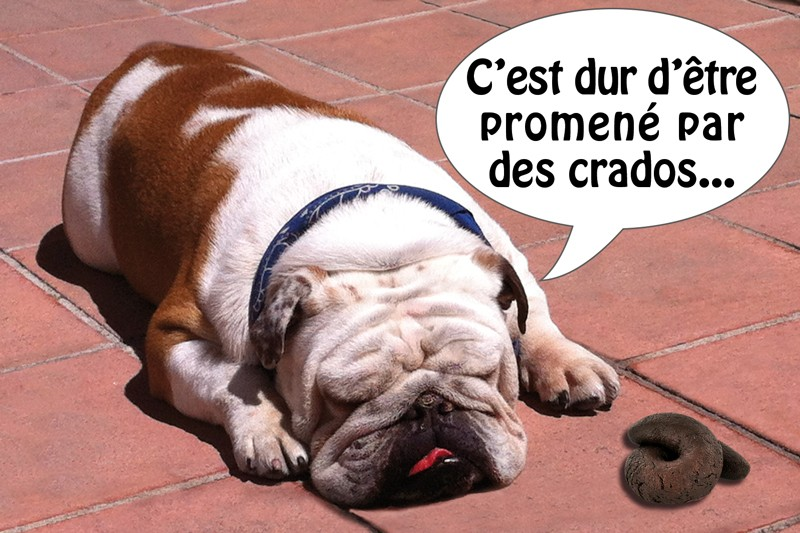 chien_de_crados