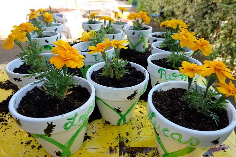 jardinage_coty_12